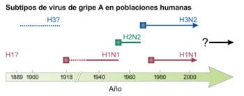Subtipos del virus de la gripe en la historia